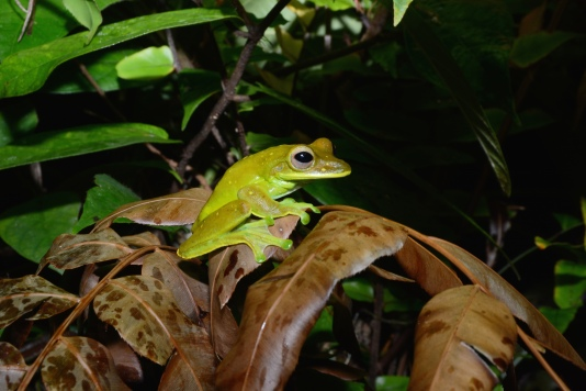 The rainforest surrounding Imbu Rano Lodge is filled with an abundance of life, including spiders and invertebrates, frogs, birds, reptiles, and more.