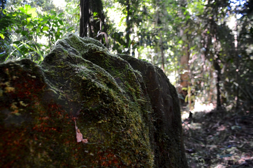 A cultural heritage site of unknown age on the ridge of Kolombangara. The upper 400 meter contour of the island contains most of its cultural heritage, making it an important site not only for environmental conservation, but cultural preservation as well.
