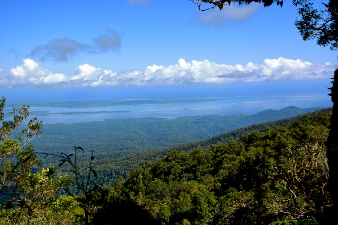 Overlooking a turquoise landscape and sprawling trees along the volcanic ridge of Kolombangara