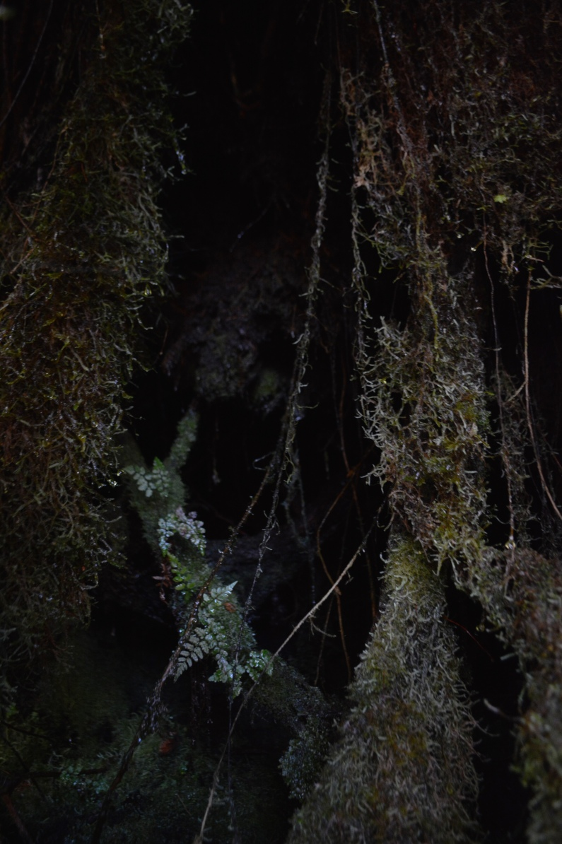 Large mosses, fungi, and epiphytes erupting throughout the cloud forest