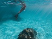 Freediving the waters surrounding Lord Howe Island, NSW Australia. Due to a sustained conservation effort across the island's community & governance, marine ecosystems remain remarkably pristine, preserved & rich with an incredible biodiversity of life.